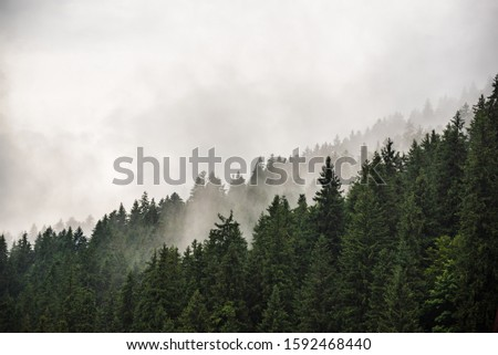Misty foggy mountain landscape with fir forest and copyspace in vintage retro hipster style #1592468440