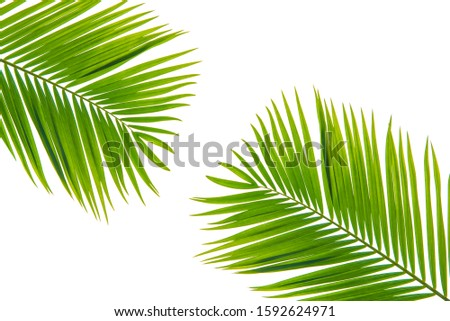 Concept texture leaves abstract green nature background tropical leaves coconut isolated on white background #1592624971