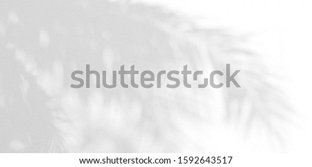 Background shadow and Nature shadows.Gray shadows trees leaf on white wall. Abstract shadows nature concept blurred background.White and Black.Texture shadows  #1592643517