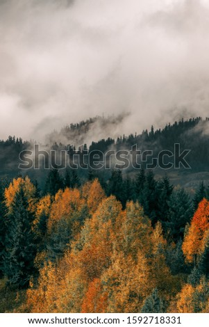Beautiful orange and red autumn forest, many trees on the orange hills #1592718331