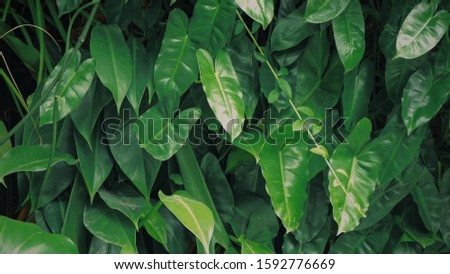 green leaves stuck to the wall #1592776669