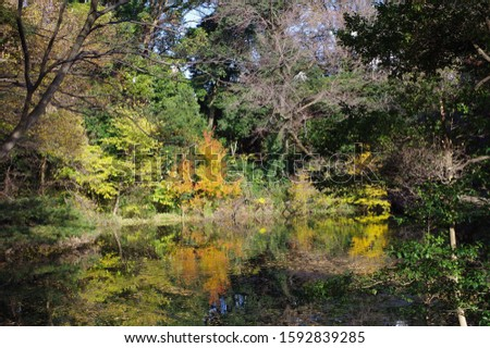 Autumn leaves are reflected on the surface of the water. #1592839285