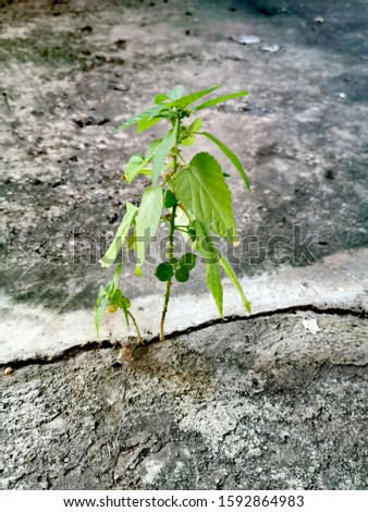 Small Plant beautifully grows through cracked cement floor, hope concept, encouragement concept, new growing life. #1592864983