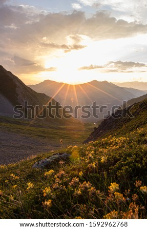 Sunset over a mountain with yellow flowers in the foreground #1592962768