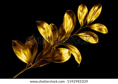 Tree branch with golden leaves on black background isolated closeup, decorative gold color plant sprig, yellow shiny metal twig, foliage illustration, floral design element, herbal symbol, botany sign