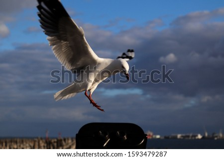 Seagull flying over a tranquil pier #1593479287