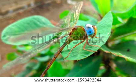The beauty of the blue-eyed dragonfly that was perched on a green leaf #1593492544