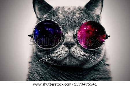 cool pic of a cat