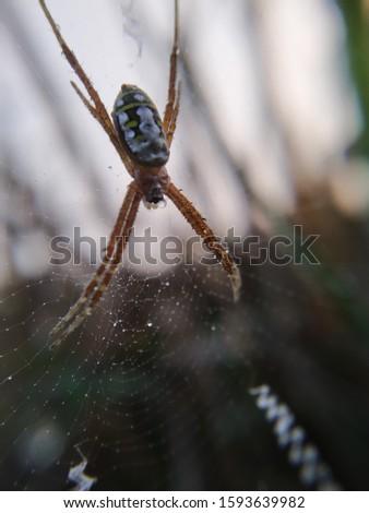 nature picture animal macro photography macro photo #1593639982