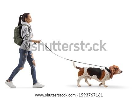 Full length profile shot of a female student walking a basset hound dog isolated on white background #1593767161