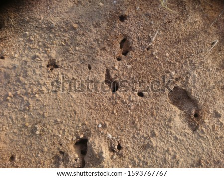 Ant Photos.World's Best Ants Nests Stock Pictures.Ant Nest Photos