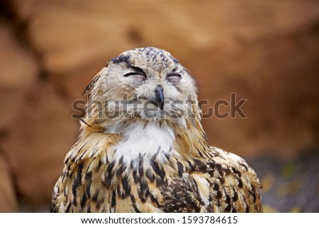 Owl portrait, close up of funny face, owl laughing with very happy, comical face. Happiness concept