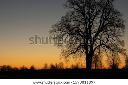 sunset with tree silhouette orange and black #1593811897
