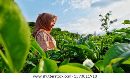 Potrait of Asian hijab woman wearing Kebaya get photo shoot session at terraced tea gardens with cloudy sky background. Nature concept. Beautiful green tea garden. #1593811918