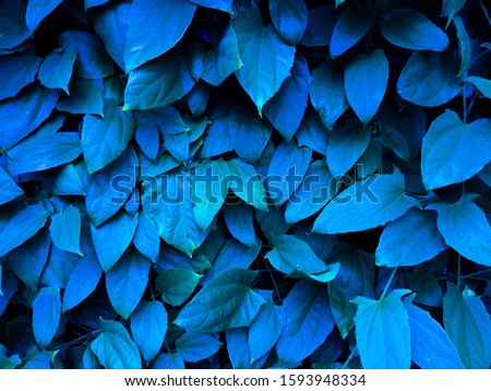 leaf in cyan colour, texture. #1593948334