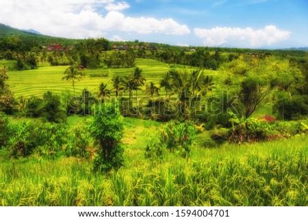 View of Jatiluwih rice terrace, Bali #1594004701