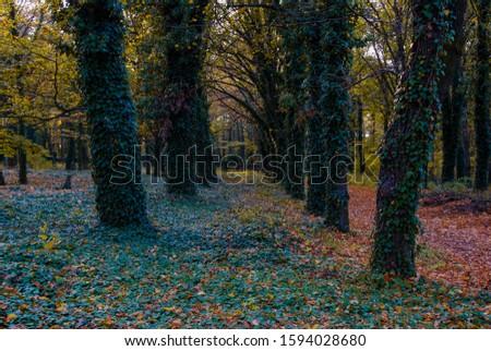 Alley in Bohnice cemetery in autumn  #1594028680