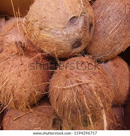 Macro photo of tropical fruit coconut. Texture hairy nuts coconut fruit. Coconuts in the shell. #1594296757