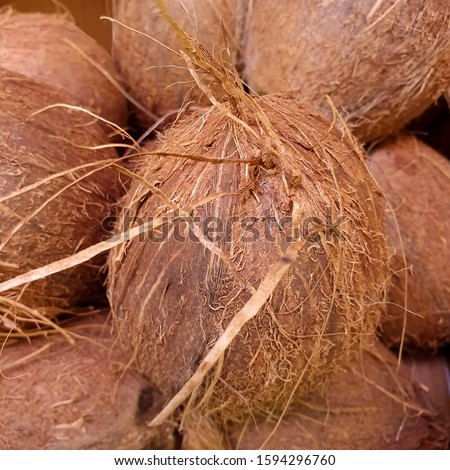 Macro photo of tropical fruit coconut. Texture hairy nuts coconut fruit. Coconuts in the shell. #1594296760