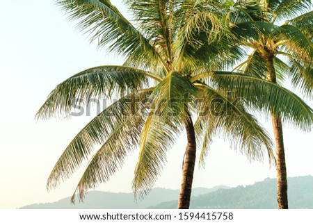 Palm trees at tropical coast. Tropical background. #1594415758