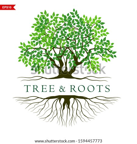 Abstract tree logo design, Green tree and leaf, root vector - Inspiration of the tree of life logo design is isolated against a white background #1594457773