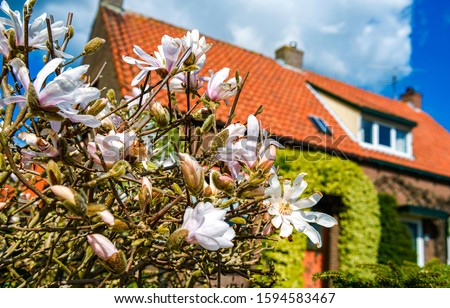 Cottage flowers garden scene. Cottage flowers view. Cottage garden flowers. Cottage house flowers #1594583467