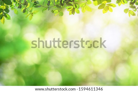 Fresh and green leaves green bokeh on nature abstract blur background green bokeh from tree.Mock up for display.  montage of product,Banner or header for advertise on social media,Spring and Summer. #1594611346