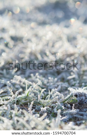 frost frost with ice crystals on the grass green winter morning. close-up, space for text. #1594700704