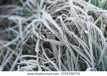 frost frost with ice crystals on the leaves oblong winter morning. close-up, space for text. #1594700710