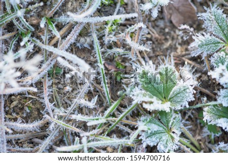 frost frost with ice crystals on the grass green winter morning. close-up, space for text. #1594700716