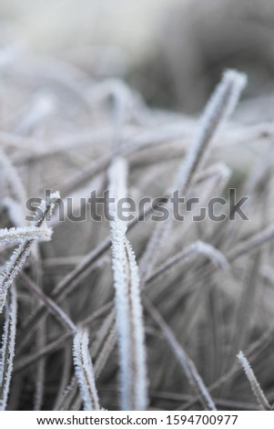 frost frost with ice crystals on the leaves oblong winter morning. close-up, space for text. #1594700977