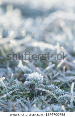 frost frost with ice crystals on the grass green winter morning. close-up, space for text. #1594700986