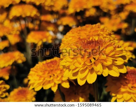 Beautiful  yellow  flowers, floral and natural backgrounds #1595089465