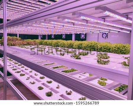 Vegetables are growing in indoor farm/vertical farm. Plants on vertical farms grow with led lights. Vertical farming is sustainable agriculture for future food. #1595266789