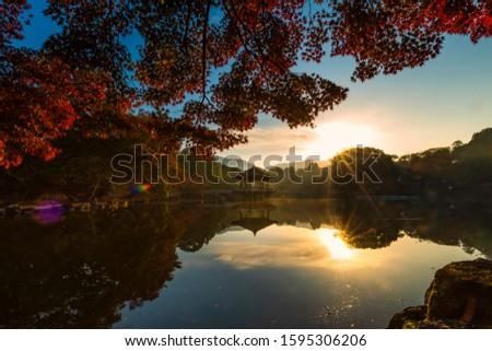 Beautiful Morning in Nara deer park #1595306206
