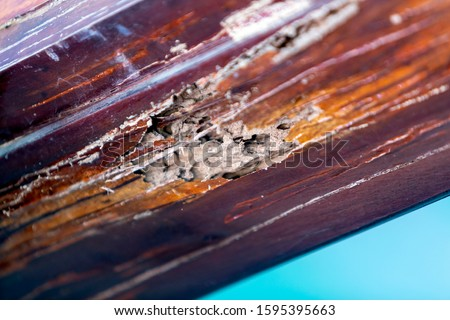 High quality image of wood termite. Wood is destroyed by termites. Termites eat on wooden doors