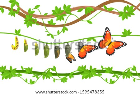 Butterfly life cycle colorful flat vector illustration. Caterpillar, cocoon and butterfly metamorphosis, transformation, change. Egg, larva, pupa and adult transition. Insects on tree leaves.