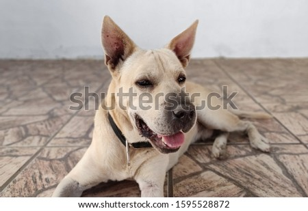 Happy dog posing for picture.