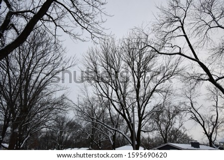 A snow covered neighborhood with lots of trees following a blizzard in Kansas City, Missouri. Picture was taken in December at sunset.