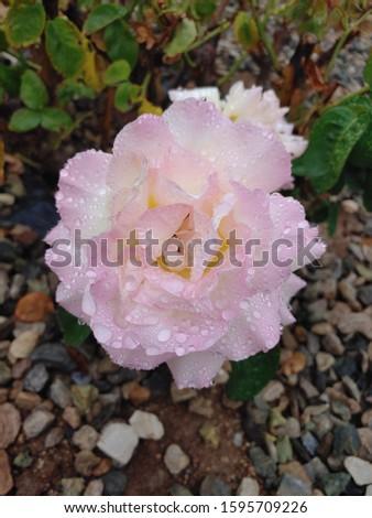 Pretty in pink, pretty with rain  #1595709226