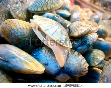 Clams. Opened shellfish. Fresh shellfishes.  #1595988814