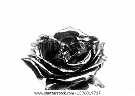 Eternal beauty. silver rose flower. wealth and richness. floristics business. Vintage. luxury and success. metallized antique decoration. natural beauty. isolated on white. #1596019717