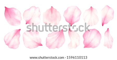 Pink rose,cherry, plum, sakura petals isolated on white background.Valentines day,wedding, mother day,japanese hanami decoration.Digital clip art.Warercolor illustration