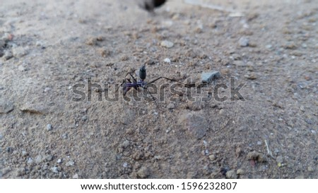 insect, Insects on the ground, Insect macro photos. Animals And Wildlife.