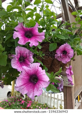 Beautiful and brightly colored flower. #1596336943