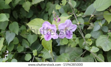 twin violet colour flower from the front view #1596385000