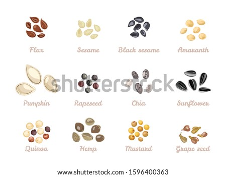 Seed set. Vector illustration of Flax seed, Sesame, Black sesame, Amaranth, Pumpkin seeds, Rapeseed, Chia, Sunflower, Quinoa, Hemp, Mustard, Grape seed isolated on white. Cartoon flat style. #1596400363