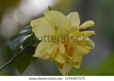 beautiful yellow flower close up pic