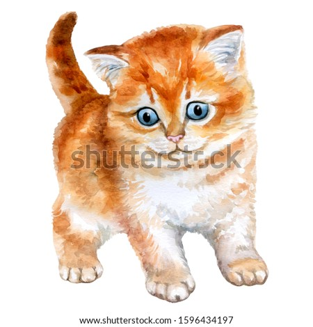 Cute Red kitten isolated on a white background. Cat animal. Watercolor. Illustration. Template. Close-up. Clip art. Hand drawn.