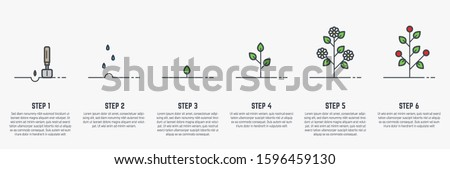 Growing plant stages. Seeds, watering step, sprout and flower, grown plant. House or outdor plant. Line style flat illustration of plant with leaves, flowers and fruit. Thin lines. Grow process. #1596459130